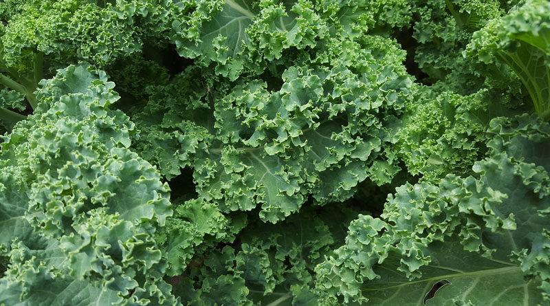 Cashew-Caesar-Salad-Recipe