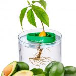 AvoSeedo-Bowl-Grow-Your-Own-Avocado-Tree-800x445