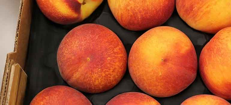 Foods to Feed Your Dog That Are Healthier Than Treats Peaches 770