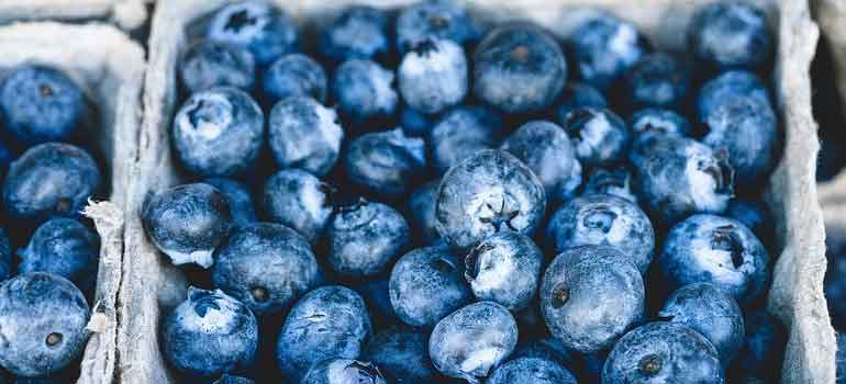 Foods to Feed Your Dog That Are Healthier Than Treats blueberries 770