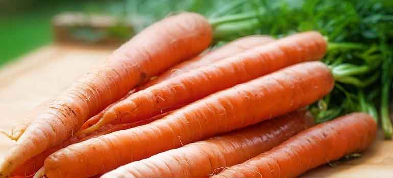 Foods to Feed Your Dog That Are Healthier Than Treats carrots 770