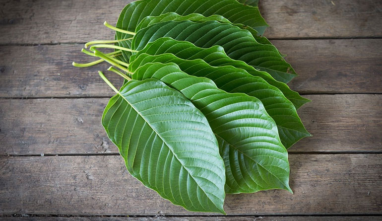 2 Kratom Drug Facts Addiction Claims and Call for the Ban 800x445